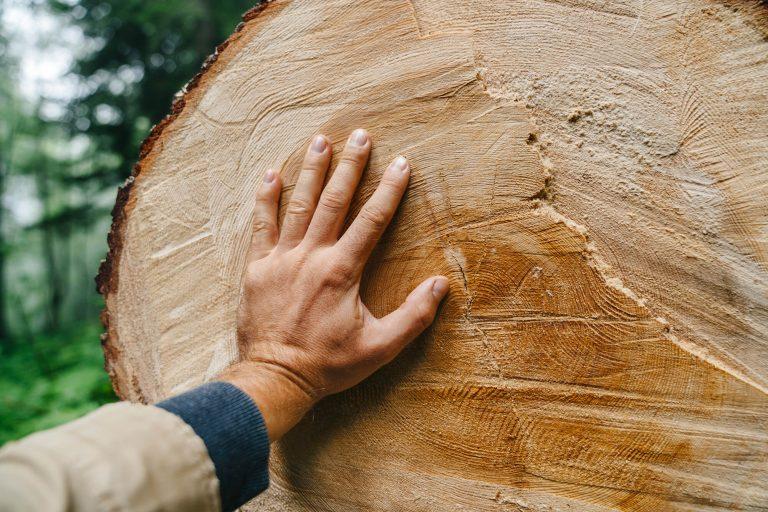 Hand berührt Baumstamm